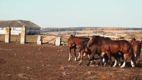 Manada de caballos en el establo almacen de metraje de vídeo