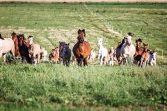 Manada de caballos en el pasto del verano imagenes de archivo