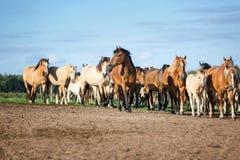 Manada de caballos en el pasto del verano imagen de archivo libre de regalías