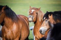 Manada de caballos en el pasto del verano fotos de archivo