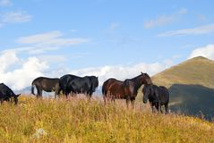 manada de caballos en el pasto libre en las montañas Foto de archivo libre de regalías