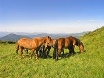 Manada de caballos en las colinas Fotografía de archivo