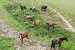 Manada de caballos en un pasto de la montaña Foto de archivo libre de regalías