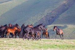 Manada de caballos en un pasto del verano Fotografía de archivo libre de regalías