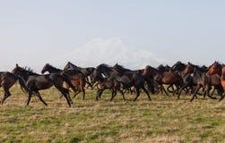 Manada de caballos en un pasto del verano. Fotografía de archivo libre de regalías