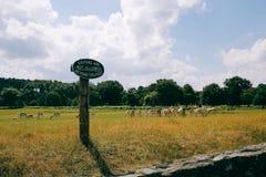 Manada de ciervos en el parque de Bradgate Foto de archivo