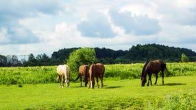 Manada de diversos caballos que pastan en campo verde Fotos de archivo