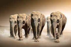 Manada de elefantes fotografía de archivo