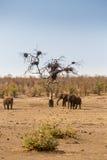 Manada de elefantes africanos en la sabana, parque de Kruger, Suráfrica Fotografía de archivo libre de regalías