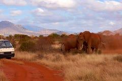 Manada de elefantes en safari en Kenia en África y coche foto de archivo