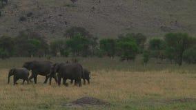 Manada de elefantes Serengeti almacen de metraje de vídeo