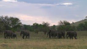 Manada de elefantes Serengeti metrajes