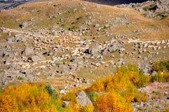Manada de las ovejas Imágenes de archivo libres de regalías