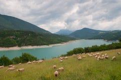 Manada de las ovejas cerca del lago de la montaña Foto de archivo