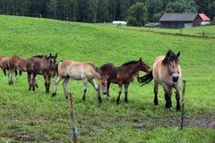 Manada de los caballos en campo de granja Foto de archivo libre de regalías