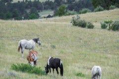 Manada de los caballos que pastan en campo Foto de archivo