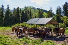 Manada de los caballos que pastan pacífico Paisaje brillante Imagen absolutamente perfecta El prado soleado, caballos se encendió fotografía de archivo