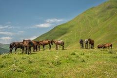 Manada de los caballos que se colocan en pasto verde debajo del cielo azul Imágenes de archivo libres de regalías