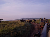 Manada de los elefantes en sabana africana Fotos de archivo