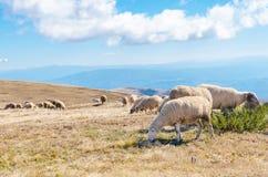 Manada de ovejas en la montaña hermosa Fotografía de archivo