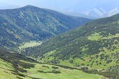 Manada de ovejas en pasto de la montaña del verano fotografía de archivo libre de regalías