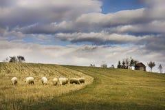 Manada de ovejas en prado de la montaña Fotos de archivo libres de regalías