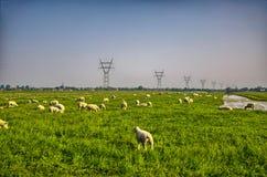 Manada de ovejas en prado hermoso de la montaña Fotos de archivo