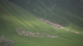 Manada de ovejas en prado hermoso de la montaña almacen de video