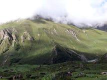 Manada de yacs en el Himalaya de Annapurna Imagen de archivo libre de regalías