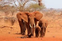 Manada del elefante Fotografía de archivo