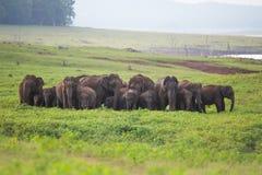 Manada del elefante Imagen de archivo libre de regalías