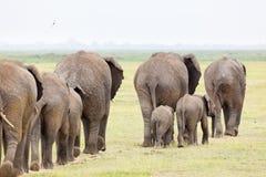Manada del elefante en Kenia imágenes de archivo libres de regalías