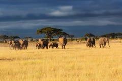 Manada del elefante momentos antes de la lluvia Fotografía de archivo libre de regalías