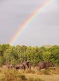 Manada grande de los elefantes de Bush (africana del Loxodonta) Imagen de archivo