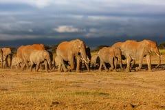 Manada grande del elefante Imágenes de archivo libres de regalías
