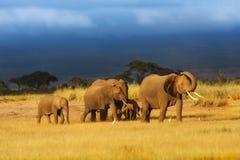 Manada hermosa del elefante Fotos de archivo
