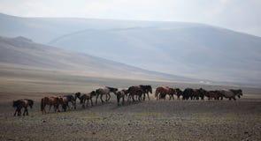 Manada mongol Foto de archivo libre de regalías