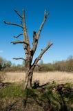 Managed tree Stock Photos