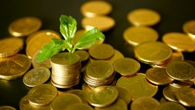 Management efficiency. Golden coins stack and green leaf on black background. Time for Success of Finance Business. Investment, business financial ideas stock footage