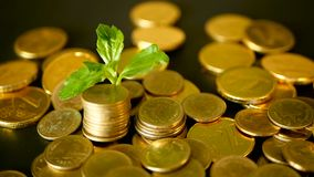 Management efficiency. Golden coins stack and green leaf on black background. Time for Success of Finance Business. Investment, business financial ideas stock video