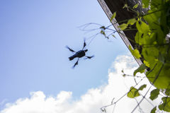 Management multicopter unmanned flight in the garden Stock Image