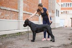 Manager met een hond Cane Corso Italian Mastiff royalty-vrije stock fotografie