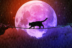 Managing business challenges uncertainty. Black cat walking on rope above clouds. Managing risk business challenges uncertainty concept. Black cat walking on stock images