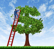 Managing Your Money. And debt management with a business man on a ladder taking care of a tree that is shaped as a dollar symbol as a  financial concept of Royalty Free Stock Photography