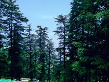 Beautiful trees of Manali. Manali is a beautiful place full of beauty in nature royalty free stock photo