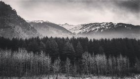 Manali forest. Manali mountains and trees Royalty Free Stock Photo