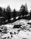 Manali. Snowfall january Stock Photography