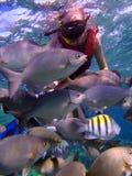 Manar som snorkeling Arkivbild