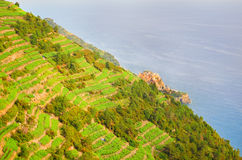 Manarola near a vine hill Royalty Free Stock Image