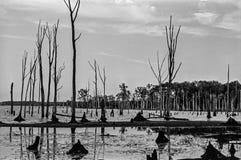 Manasquan Reservoir Landscape Stock Image